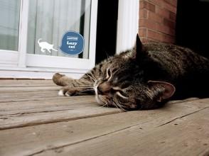 Sticker_adzif_lazy_cat_3_Loyal_Luxe_T