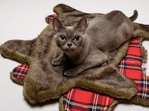 The_Faux_Bearskin_cat_carpet_2_Loyal_Luxe_T