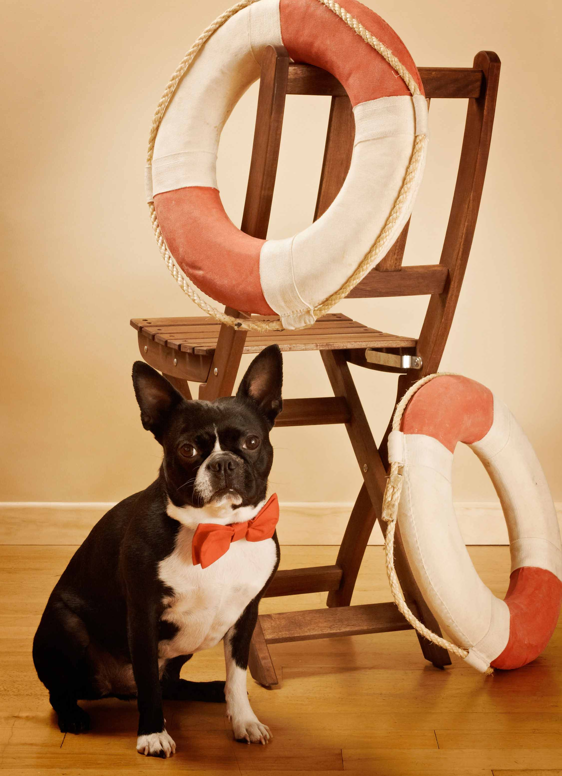 The_Original_Bow_Tie_Lifeguard_dog_collar_1_Loyal_Luxe_L