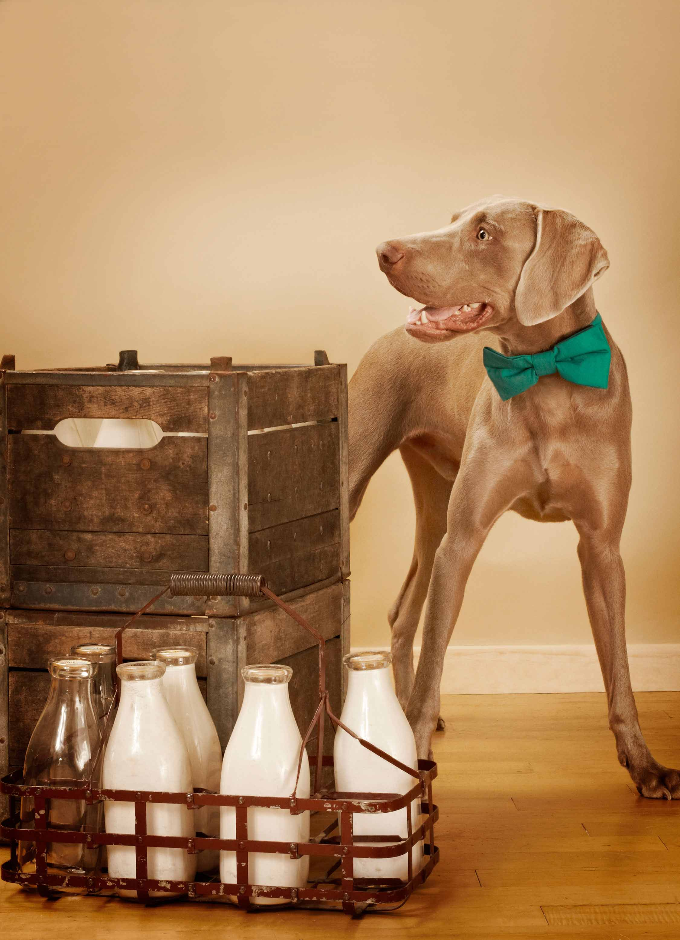 The_Original_Bow_Tie_Milkman_dog_collar_2_Loyal_Luxe_L