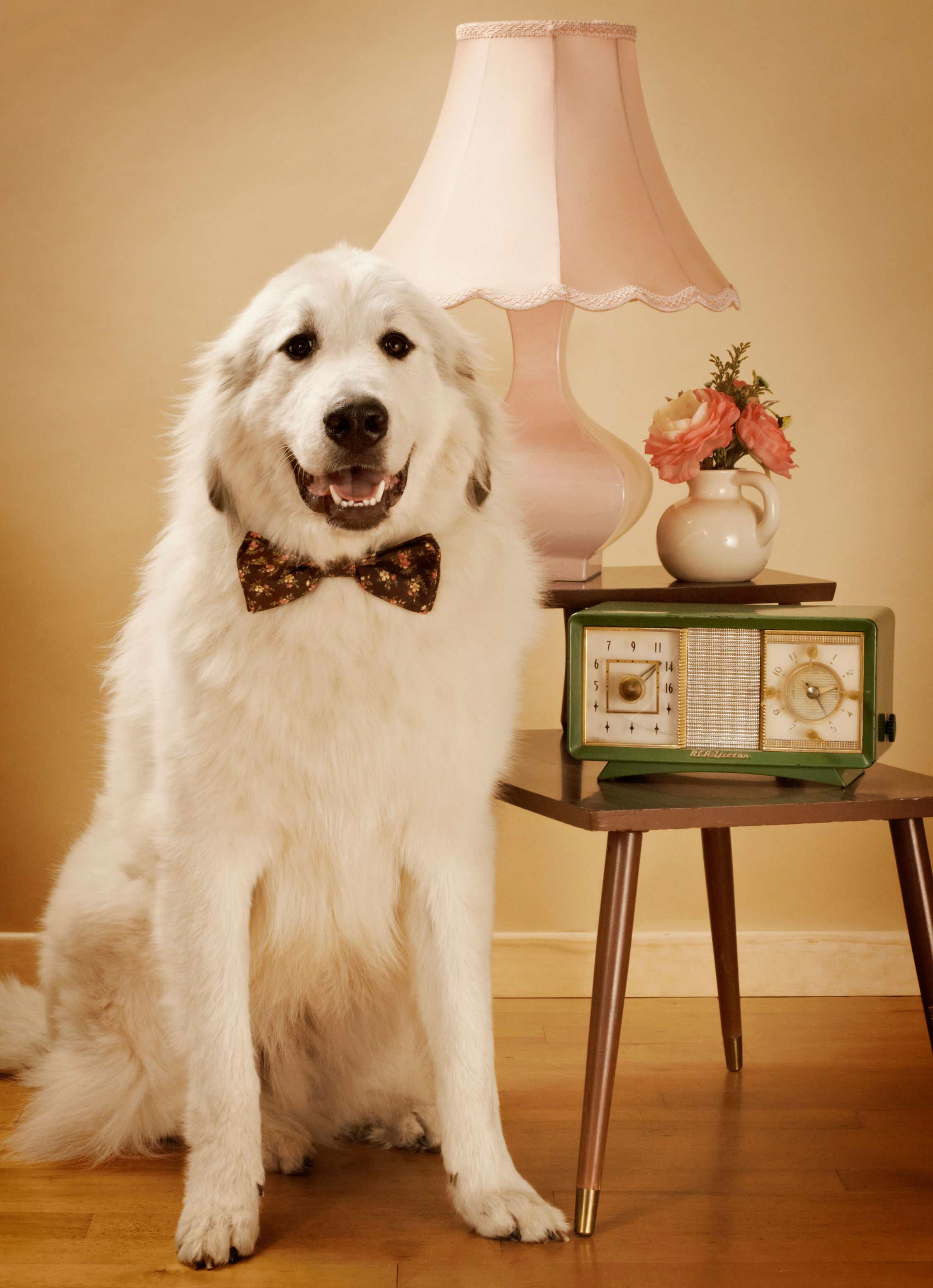 The_Original_Bow_Tie_Romantic_dog_collar_1_Loyal_Luxe_L